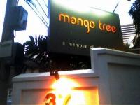saruzo_mangotree.jpg
