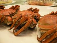 Shanhai-Crab.jpg